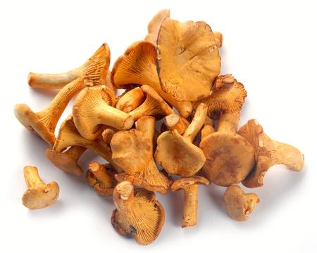 funghi: finferli; oggetti su sfondo bianco