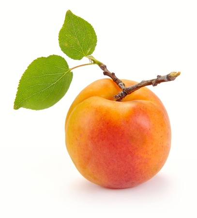 Abricot avec des feuilles sur un fond blanc