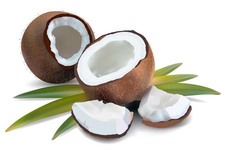 coco: Coco con hojas sobre un fondo blanco