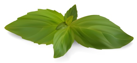 Fresh Sweet Basil.
