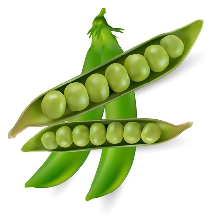 Green peas vegetable with seed Illustration