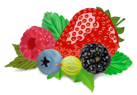 summer berries isolated on white illustration Vector