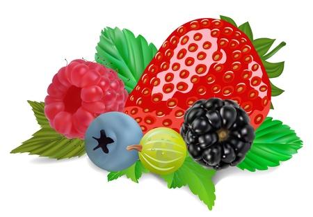 summer berries isolated on white illustration
