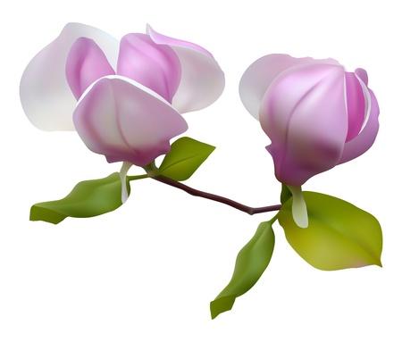꽃이 만발한: 녹색 잔디에 대 한 목련 꽃이 만발한