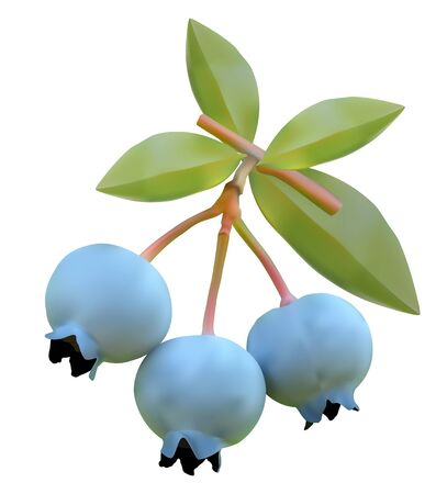 bilberry: Blueberry on branches of a bush