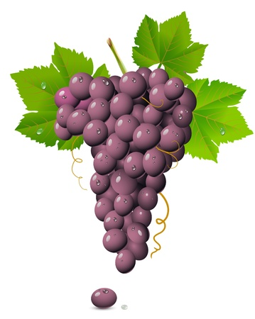 purple grapes: Grape cluster isolated on white