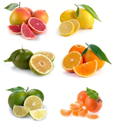 set of citrus fruits on white background photo