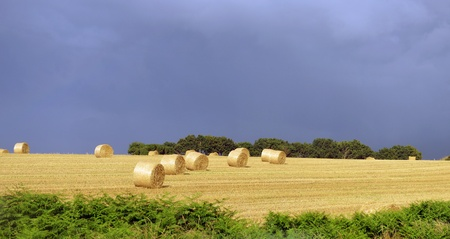 Farmers field with hay bales after cropping photo