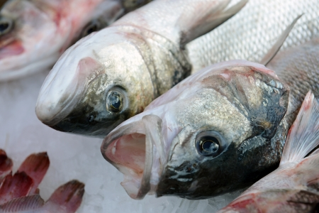 sparus: Gilt-head (Dorado) on ice at the seafood booth Stock Photo