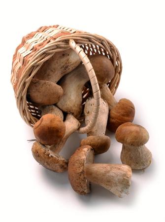 mushrooms in a basket on a white background Stock Photo - 15039277