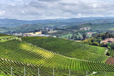 vineyards in Italy photo