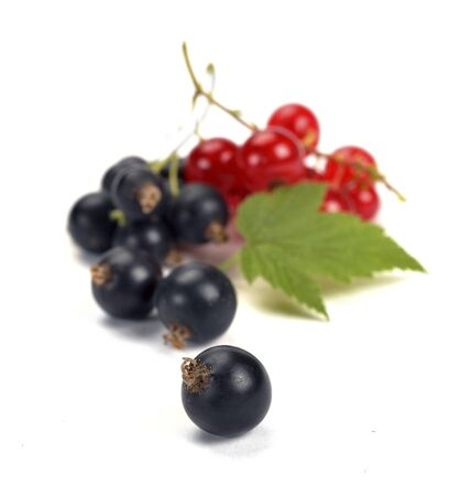 black currants: black currants with leaves on white background Stock Photo