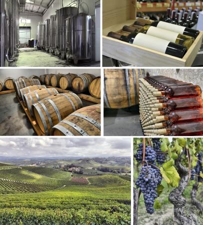 winemaking: set of images of winemaking Stock Photo