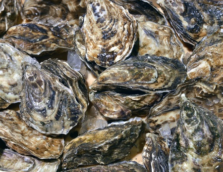 oyster shell: closed oysters in seafood store Stock Photo