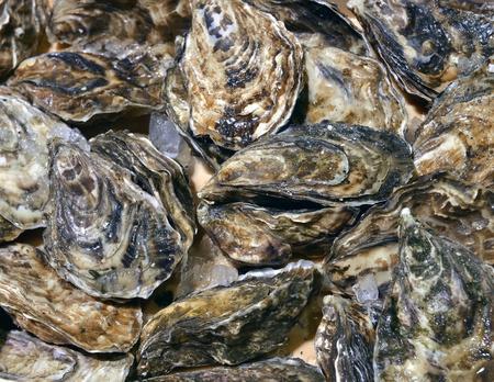 ostra: ostras cerradas en tienda mariscos