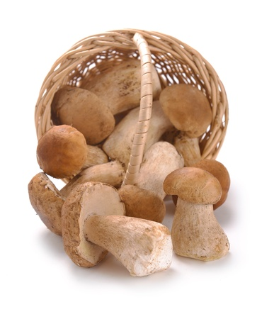 cep: mushrooms in a basket on a white background