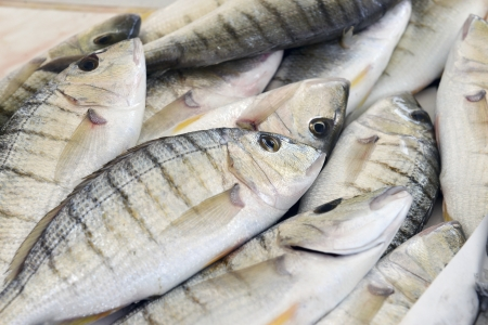 grouper fish in shop on the counter Stock Photo - 20232398