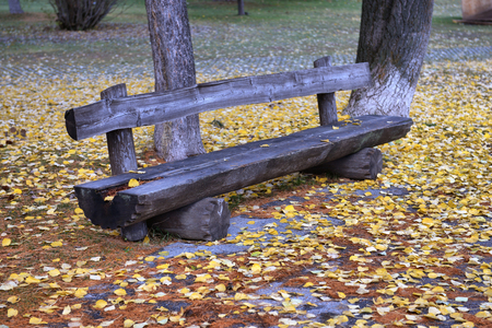 falltime: bench in the park among yellow leaves