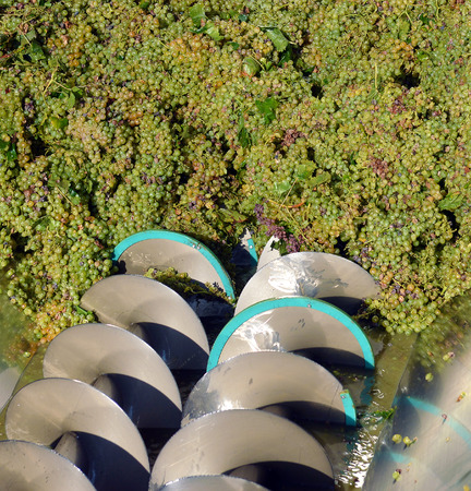 winepress: pressure grapes at the winery