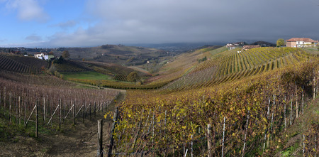 piedmont: Piedmont Vineyards in the fall after harvest