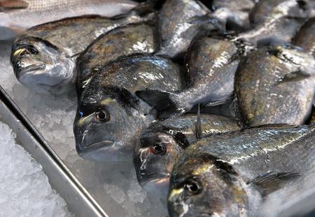 showcase: showcase of seafood in the sea market Stock Photo