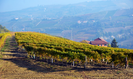 panorama of autumn vineyards in Italy, Piedmont Stock Photo