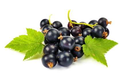 Fresh black currant with leaves on white background