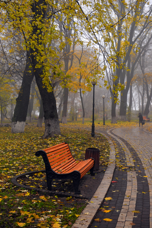 Colorful autumn trees with yellowed foliage in the autumn park. Golden autumn trees in city park in autumn weather Stock fotó