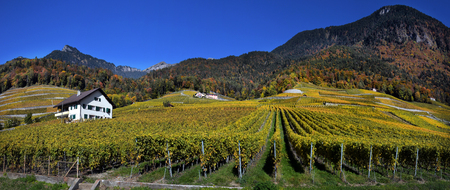 panorama of autumn vineyards in Switzerland View on Lavaux region by autumn day, Vaud Banco de Imagens