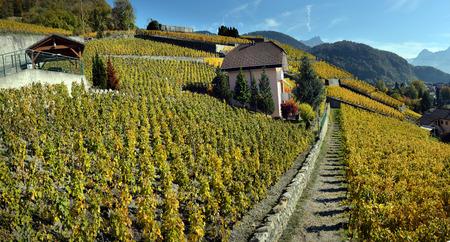 panorama of autumn vineyards in Switzerland View on Lavaux region by autumn day, Vaud Stock Photo