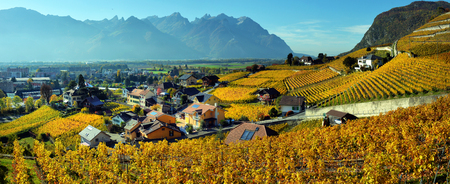 panorama of autumn vineyards in Switzerland View on Lavaux region by autumn day, Vaud Stock Photo