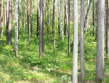taiga: Taiga, Krasnoyarsk Territory