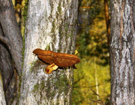 toadstool on wood photo