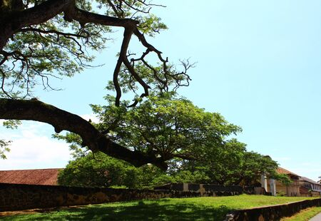 galle: The tree in Galle Fort Stock Photo