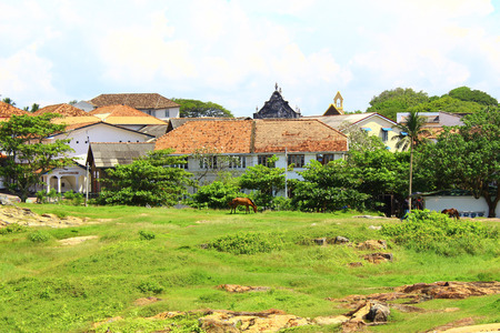 galle: A field with a horse, Galle Fort