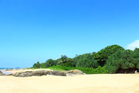 Tropical vegetation on the shores of the Indian ocean photo