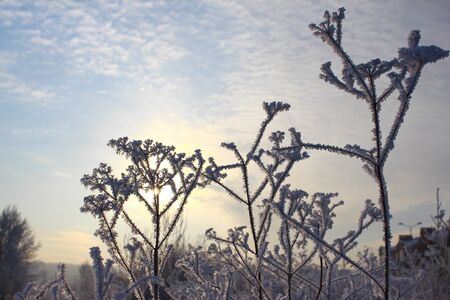 Hoarfrost on dry grass and the sun behind it photo