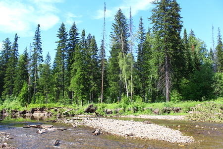 the taiga: River Sokarvka and Taiga Stock Photo