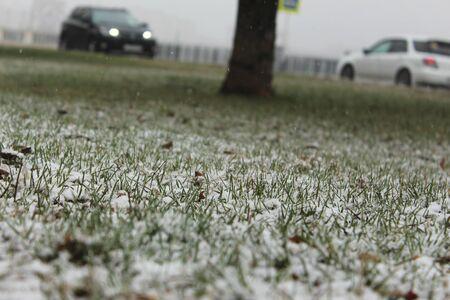 precipitacion: La nieve cayó en la hierba