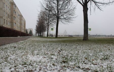 precipitation: Snow on the green grass