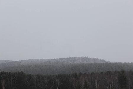 precipitaci�n: Taiga en la nieve en tiempo nublado