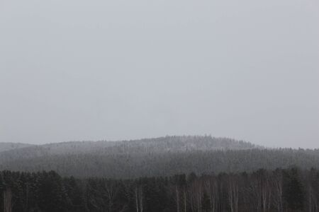 precipitation: Taiga in the snow in cloudy weather Stock Photo