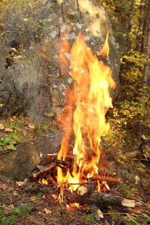 Bonfire in the forest Stock fotó