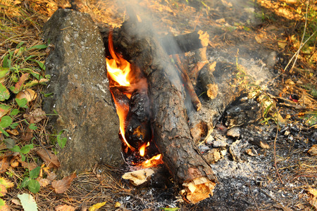 Smoldering fire in the forest