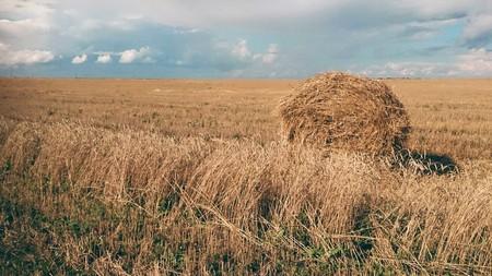 A haystack in  a field