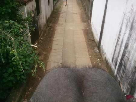 Street in Sri Lanka and the head of an elephant