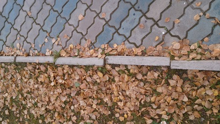 autumn leaves by the sidewalk Stock Photo