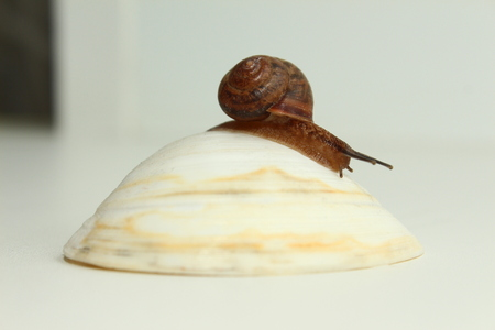 snail on shell