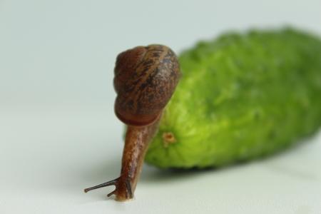 The Garden Snail descends