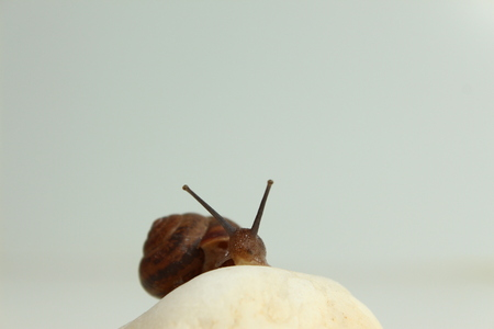 The Garden snail on a stone Stock fotó